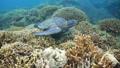 乌龟 海龟 水下 27838942