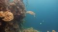 乌龟 海龟 水下 27838943