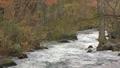 奥入瀬渓流 渓流 自然の動画 27842917