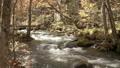 奥入瀬渓流 渓流 自然の動画 27843218