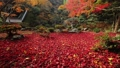 11月 紅葉の徳源院 秋の近江 27882991