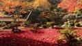 11月 紅葉の徳源院 秋の近江 27882993