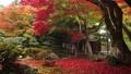 11月 紅葉の徳源院 秋の近江 27882999
