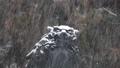 諏訪大社 雪景色 27896999