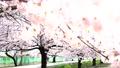 桜 27902754