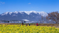比良山と菜の花 27917798