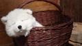 puppy animal dog 28040656
