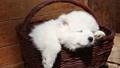 puppy animal dog 28040658