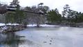 冬の松江城内堀の風景 泳ぐカモたち 28045003