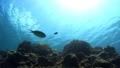 熱帯魚 海水魚 水中の動画 28111407