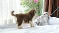 animal cat dog 28149143