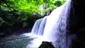 神秘的な光のカーテン光芒木漏れ日が美しい熊本県小国町の人気観光スポット鍋ヶ滝 28188544