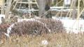 雀 すずめ スズメの動画 28278191