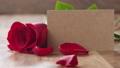 玫瑰 玫瑰花 紅色 28288591