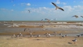 Seagulls flying on the seashore 28376665