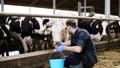 乳品 奶牛 畜牧业 28536347