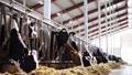 乳品 奶牛 畜牧业 28536415