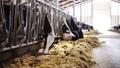 乳品 奶牛 畜牧业 28536420
