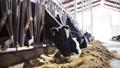 乳品 奶牛 畜牧业 28536454