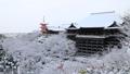 1月 雪の清水寺舞台 京都の冬景色 28691200