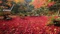 11月 紅葉の徳源院 秋の近江 28691216