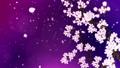 満開になる桜の花びら ループ 紫背景 28741510