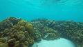 Corals and lot of fish in Andaman Sea 28983009