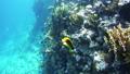 ปลา,ใต้น้ำ,สัตว์ 28993912