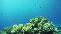 ปลา,ทะเล,ใต้น้ำ 28993987
