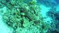 ปลา,ใต้น้ำ,สัตว์ 29056216