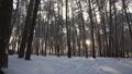 森林 樹林 冬天 29121565
