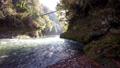 奥多摩 渓谷 渓流の動画 29259867