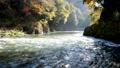 奥多摩 渓流 渓谷の動画 29259887