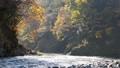 奥多摩 渓流 渓谷の動画 29259888