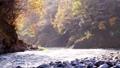 奥多摩 渓流 渓谷の動画 29259889