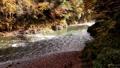 奥多摩 渓流 渓谷の動画 29259890