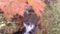 ใบไม้เปลี่ยนสีของทะเลสาบ Okutama 29259893