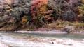 奥多摩 渓流 渓谷の動画 29259896