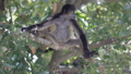 Monkey on a tree in the wild 29261382