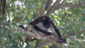 Monkey on a tree in the wild 29261383