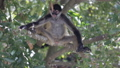 Monkey on a tree in the wild 29279724