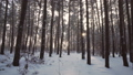 森林 樹林 冬天 29331462