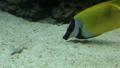 ปลา,ปะการัง,ใต้น้ำ 29331470