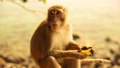 Little cute monkey eating banana 29365316