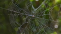 Spider on web in tropical rain forest. 29371979
