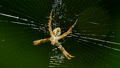 Spider on web in tropical rain forest. 29371980