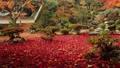 11月 紅葉の徳源院 秋の近江 29372784