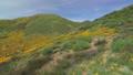 自然 花茎 景观 29375072
