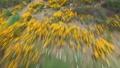 自然 花茎 景观 29375075