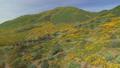 自然 花茎 景观 29375076